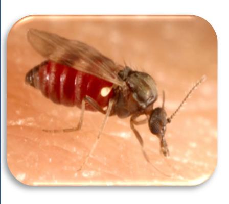 entomo
