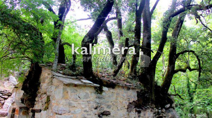 Το ανεξήγητο φαινόμενο με τα δένδρα στη σκεπή της Αγίας Θεοδώρας Βάστα μέσα από βίντεο και εικόνες του Χ. Κιντή!