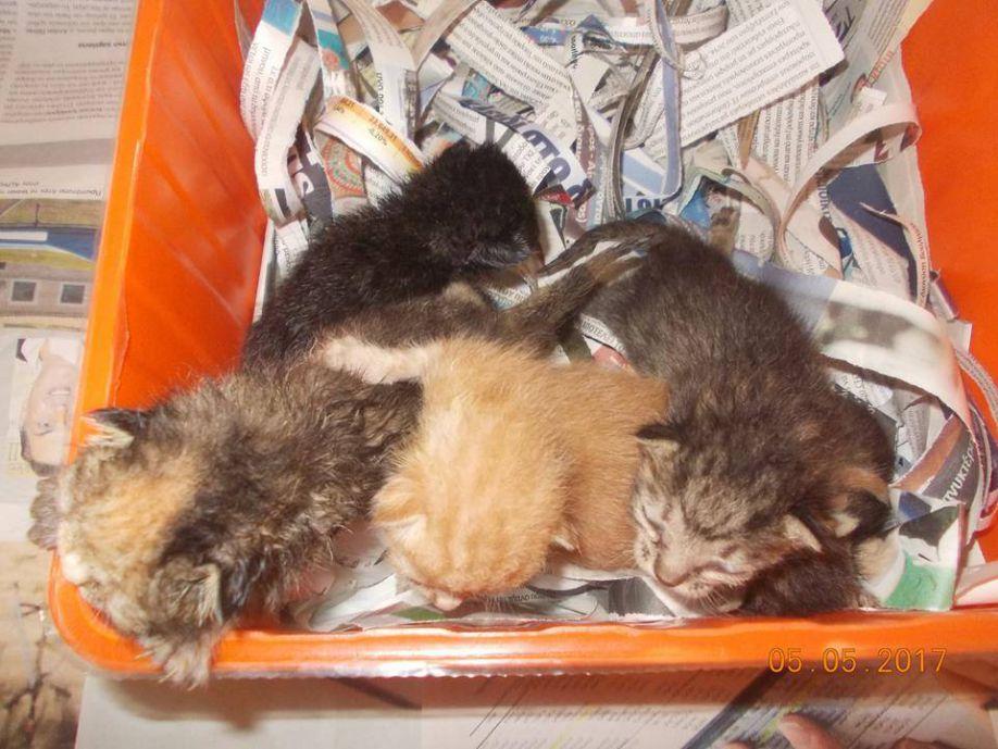 f44879869585 Τρίπολη – Πέταξαν νεογέννητα γατάκια σε κάδο σκουπιδιών (εικόνες ...